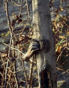 Giuseppe Penone, Alpes maritmes. Il poursuivra sa croissance sauf en ce point [Alpi Marittime. Continuerà a crescere tranne che in quel punto], 1968 Acier, arbre Vue prise à un moment de la croissance de l'arbre Ph. Giuseppe Penone et Dina Carrara, 1978 © ADAGP, Paris 2007