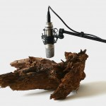 Zimoun, 25 woodworms, wood, microphone, sound system. 2009