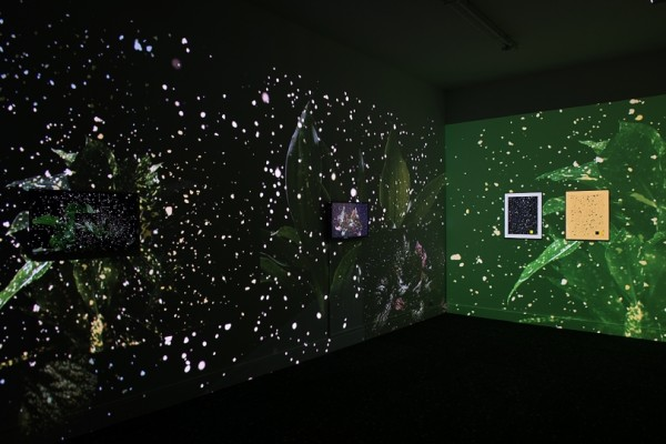 Pascual Sisto, Installation En Plein Air, 2015