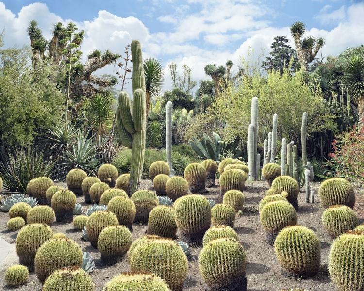 Scott McGarland, Echinocactus grusonii, 2006, série Empire