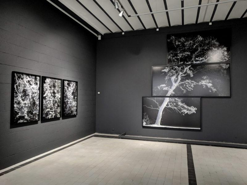 Davide Quayola, vue de l'exposition Impressions végétales au Domaine de Chaumont-sur-Loire, 2018-2019. Travail : Remains
